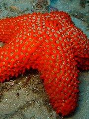 Starfish close up.jpg