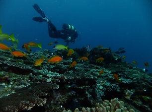 Diver coral fish.jpg