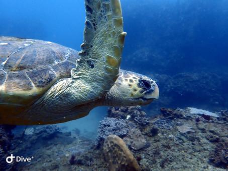 Online SSI Dive Courses with SeaXplore Dive Center