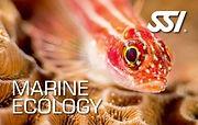 Marine Ecology.jpg