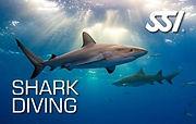Shark Diving (Small).jpg