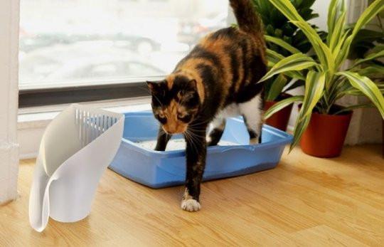 Как сдавать мочу кота