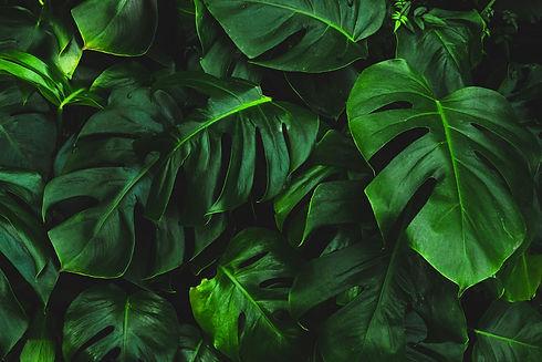 nutrition-leaves.jpg