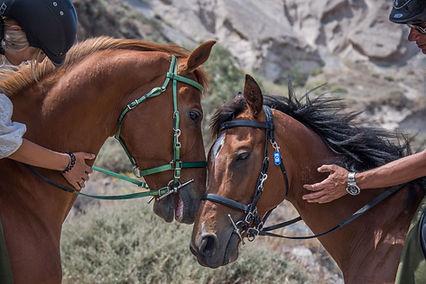 horse riding.jpeg