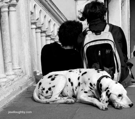 """""""Dogs of Venice #1"""" (2010)"""