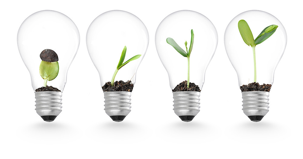 growing plants in lightbulbs