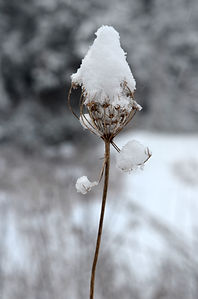 Snowman_01.jpg