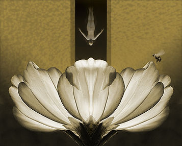 SWARTZ_FlowerV3Small.jpg