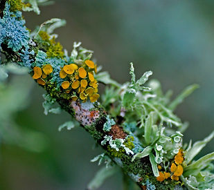 lichen_2.jpg