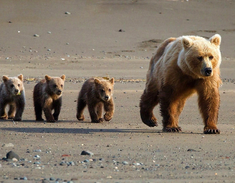 famille ours.jpg
