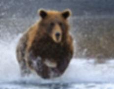 our qui court dans l'eau.jpg