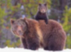 ours avec son bébé.jpg