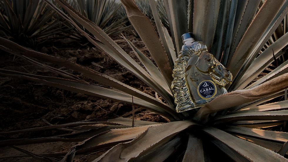 Cabal_Story_Bottle.jpg