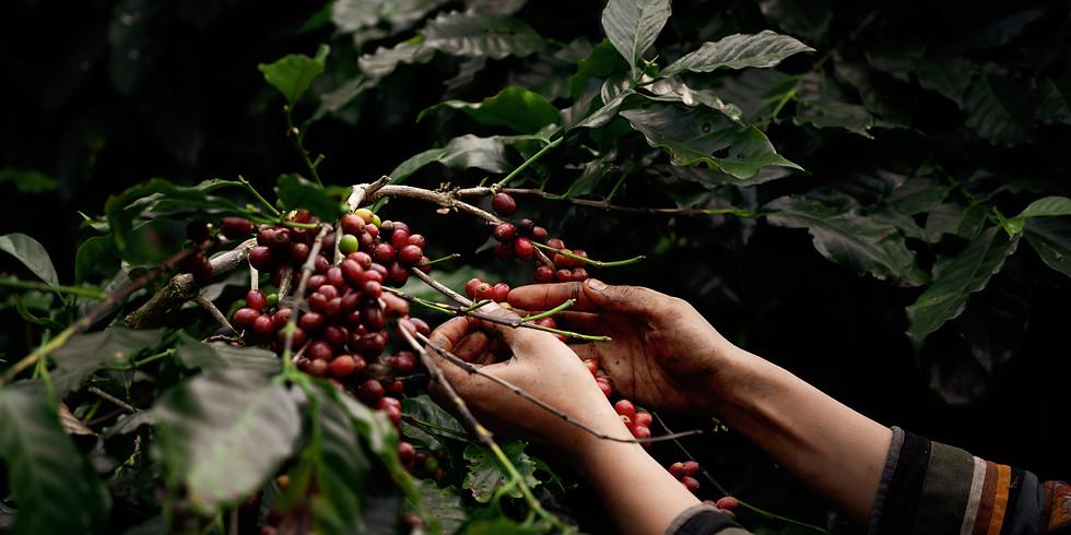 Kit de degustação + Introdução ao mundo dos cafés especiais