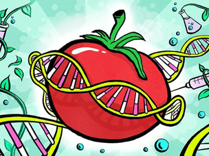 Engenharia Genética na área de Alimentos
