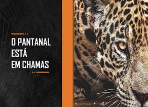 O Pantanal está em chamas