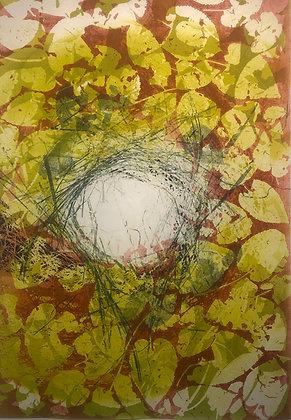 Aster Leaves Nest