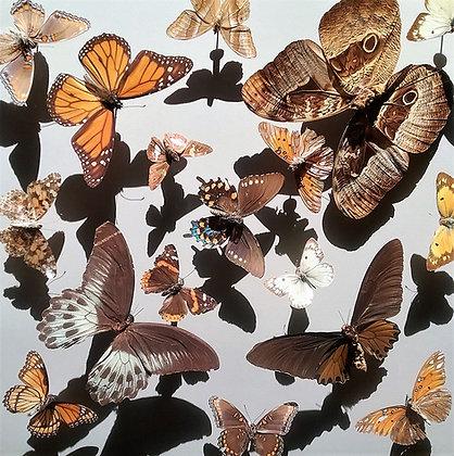 Butterfly Restoration