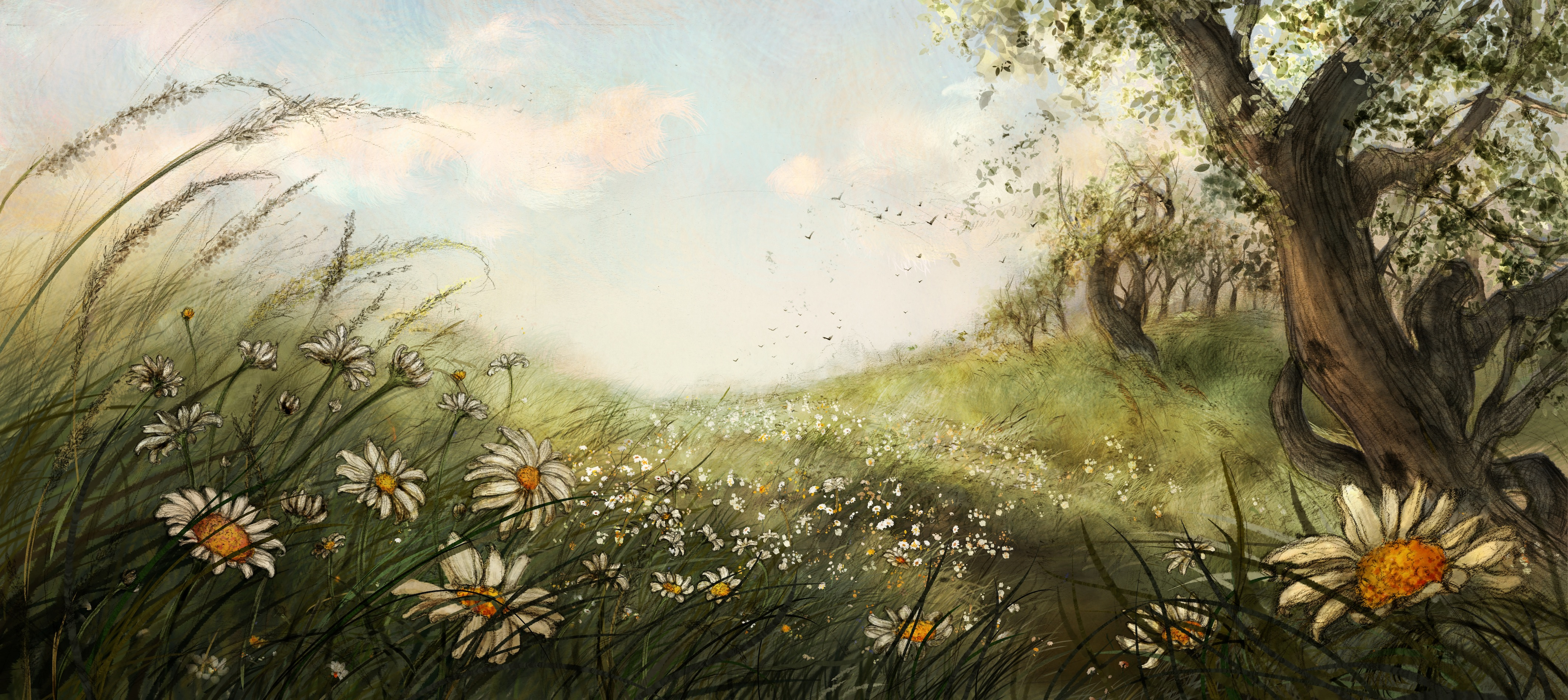 The wild daisy field