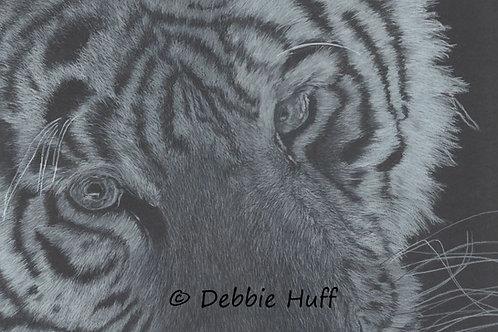 White Tiger-Fine Art