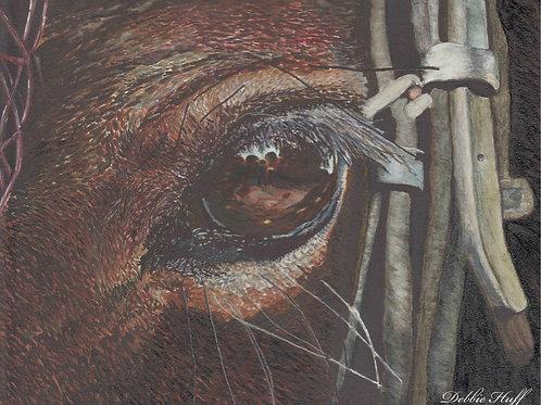 Horse Eye-Print