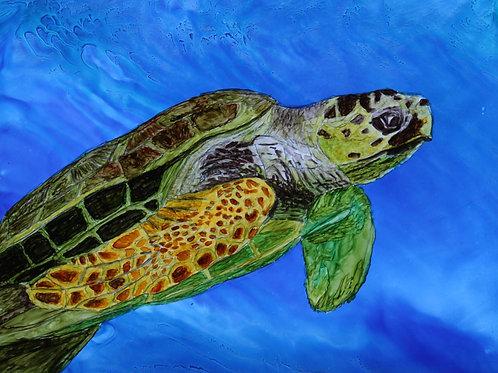 Sea Turtle-Print