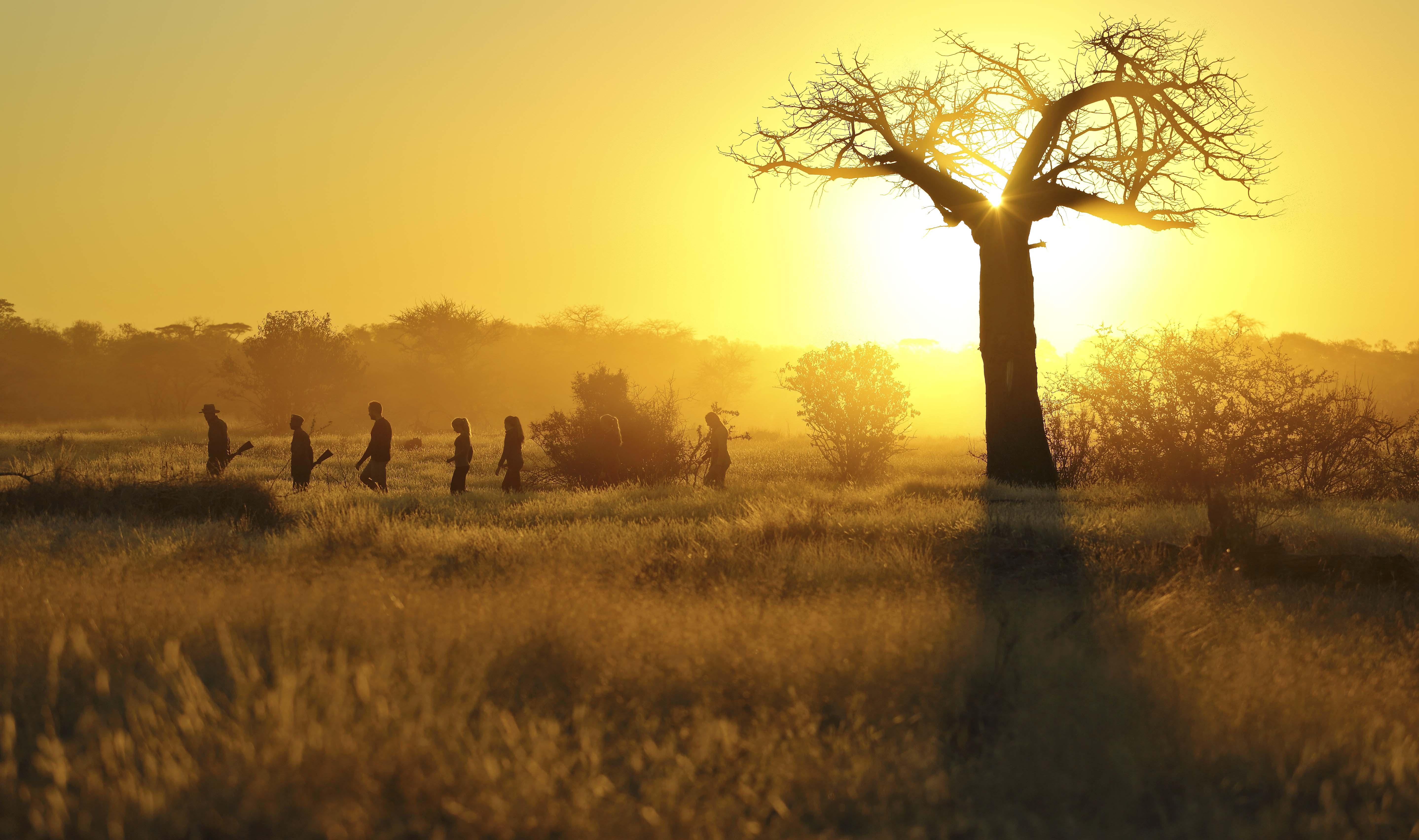 Walking Safaris with Kichaka Mobile