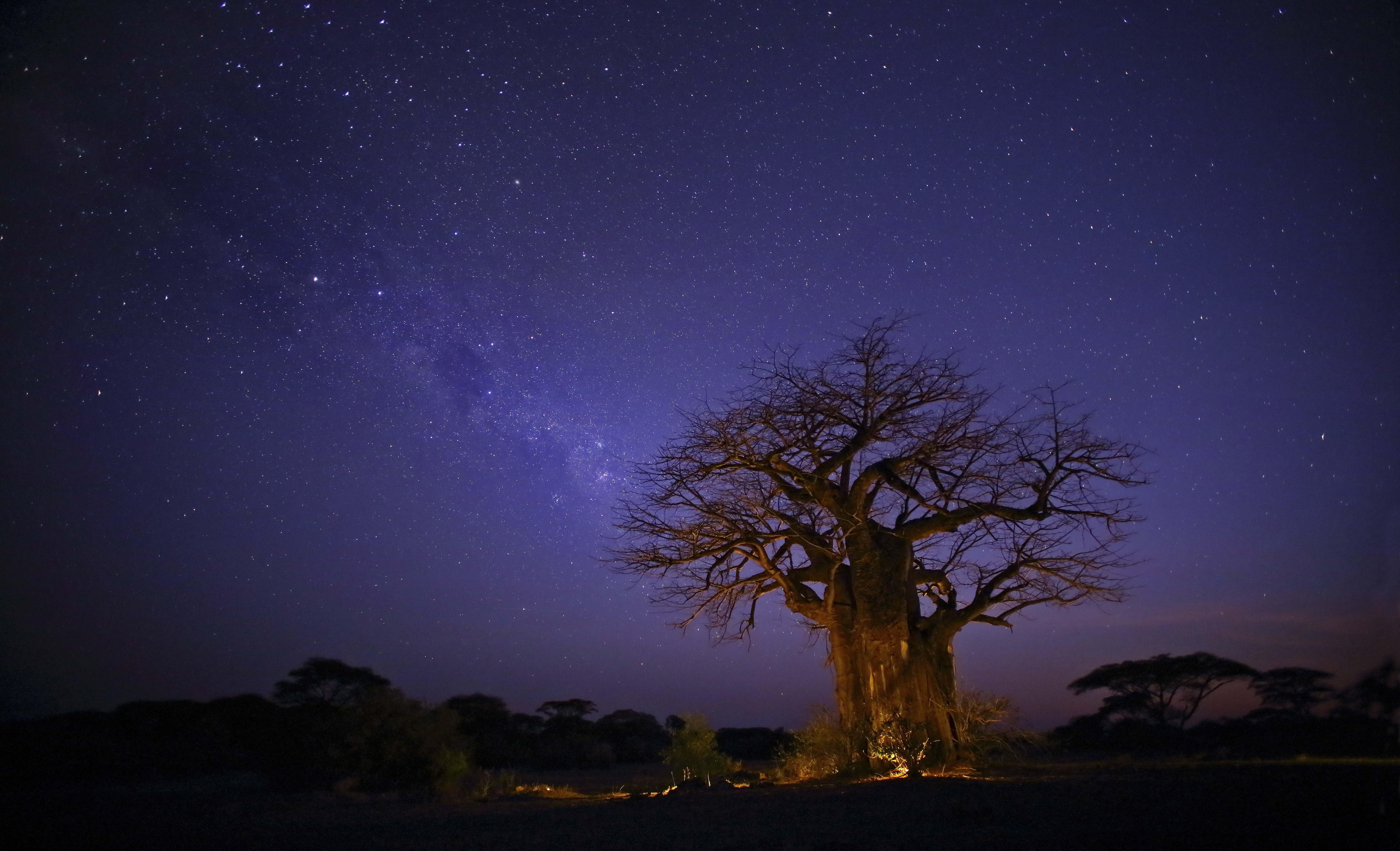 Baobabs Under the Stars