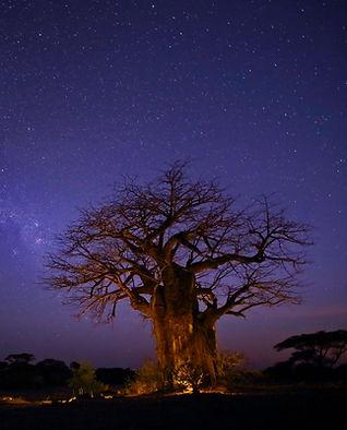 Baobab Ruaha National Park