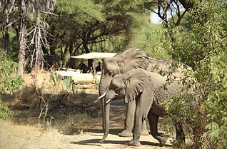 Ruaha National Park Safari