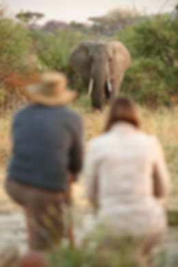 Walking Safaris Ruaha National Park