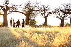 The Land of Baobabs
