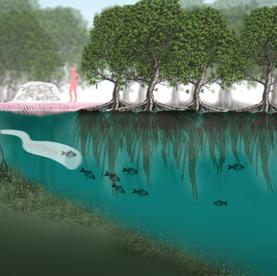 Enhanced Mangroves