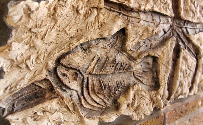 Cumbria Fossil