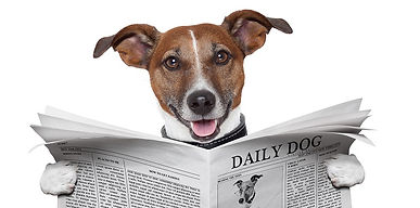 bigstock-Dog-Newspaper-39105931.jpg