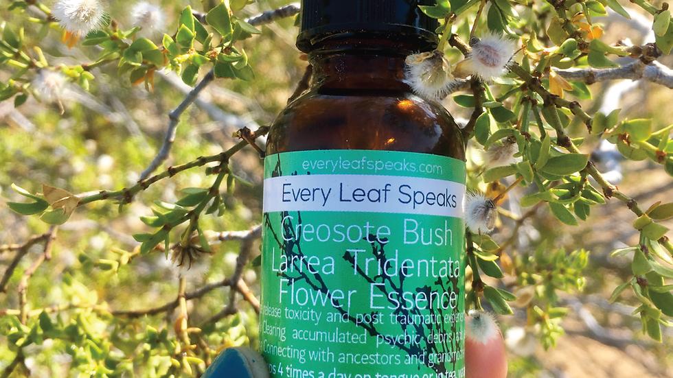 CREOSOTE BUSH - LARREA TRIDENTATA FLOWER ESSENCE in Brandy
