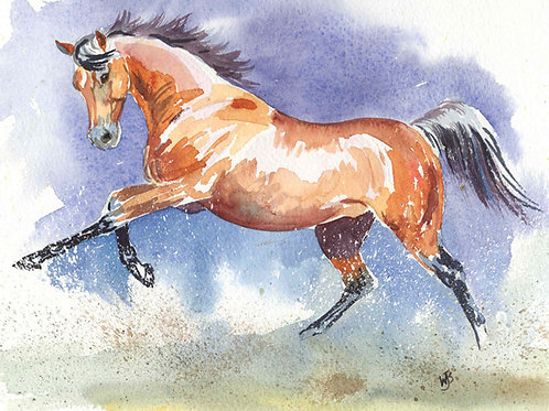 """""""At a Canter"""""""