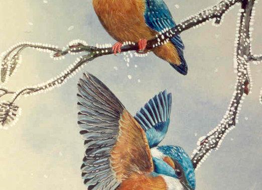 Kingfishers II