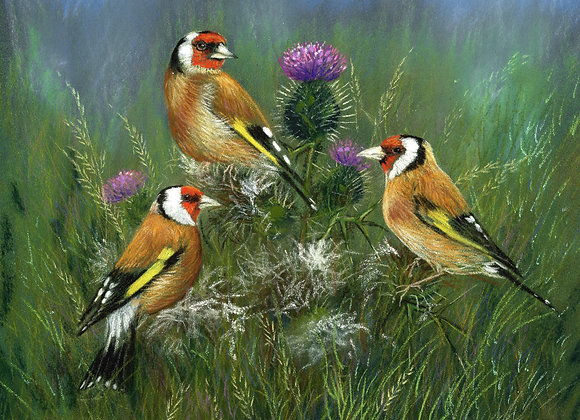 Goldfinches IV