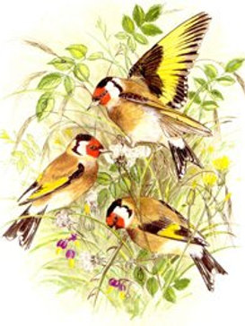 Goldfinches I