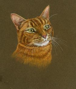ginger cat273