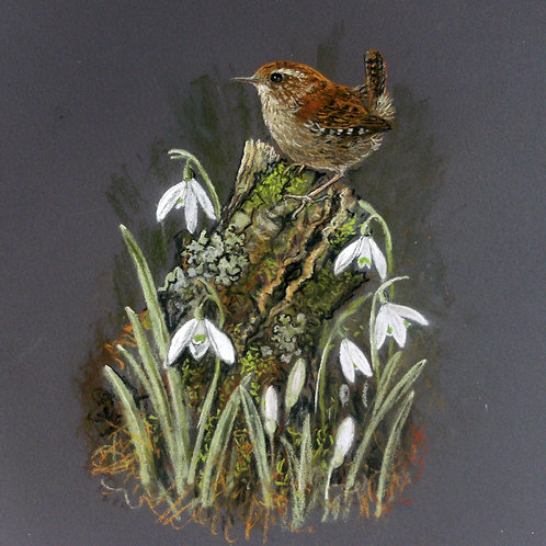 Wren and snowdrops