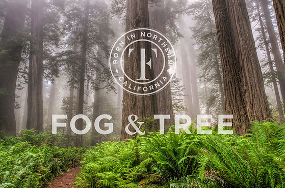 foggy-redwood-forest_withlogo.jpg