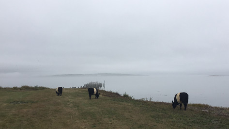 Belties at Taylor Point