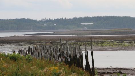 Pier Low Tide