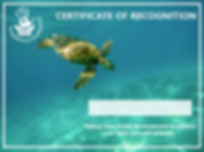 cert with turtle.PNG