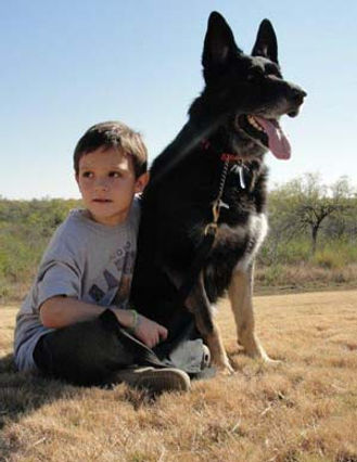 Military Working Dog Adoption