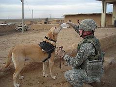Military Working Dog Adoption
