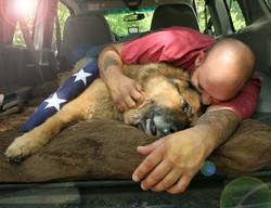 Military Working Dog Nero