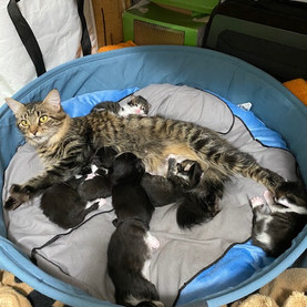 Sono nati i cuccioli